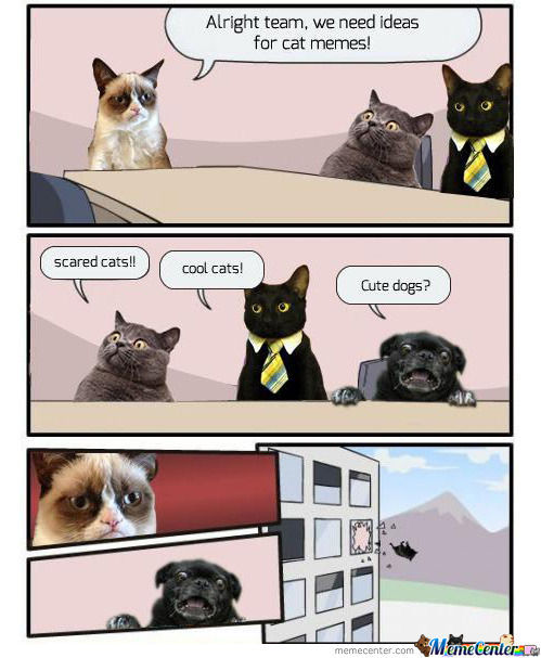 cats-product-improvement-meeting_o_1063859