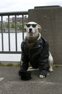 dog_wearing_leather_jacket-4996